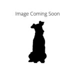 Petland Knoxville American Water Spaniel